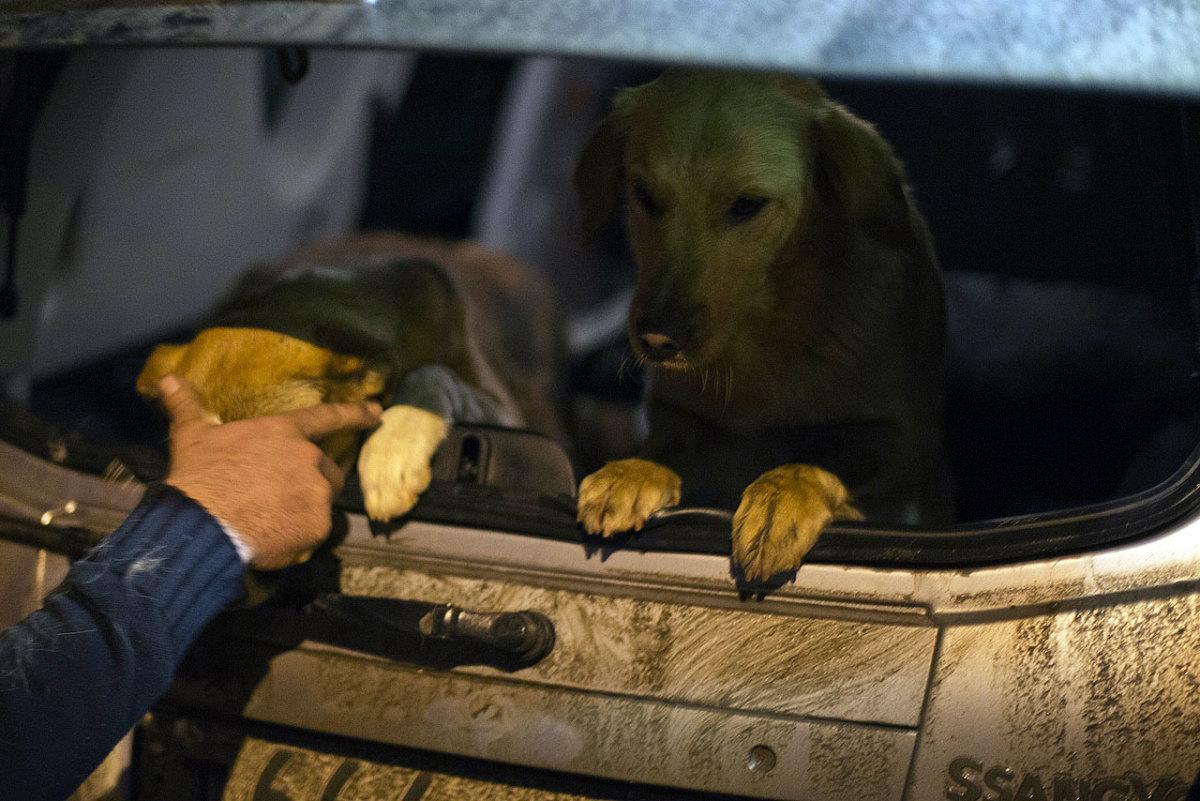 sochi-olympics-stray-dogs-7c0c0619a3ae401caf78925b20a32bd0-0.jpg