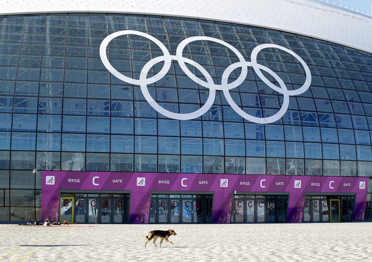 sochi-olympics-stray-dogs-39de3b3b8bd2472b8bb8b65f384a89ec-0.jpg