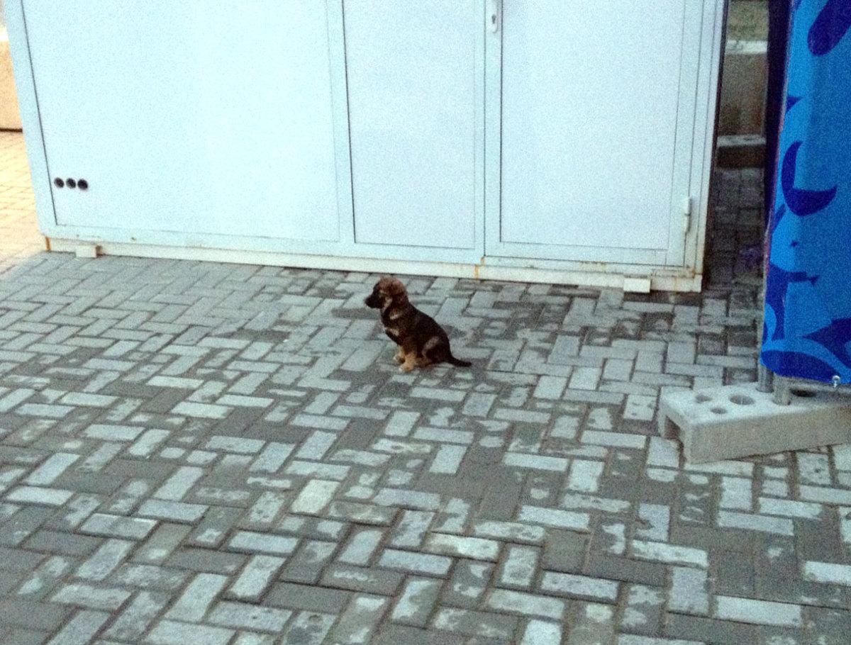 sochi-olympics-stray-dogs-tim-layden.jpg