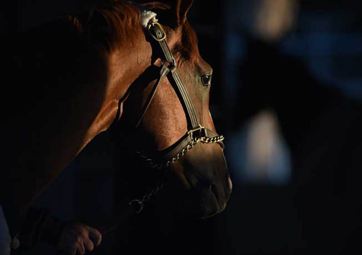The story of California Chrome's journey to the verge of immortality has a significant human element.