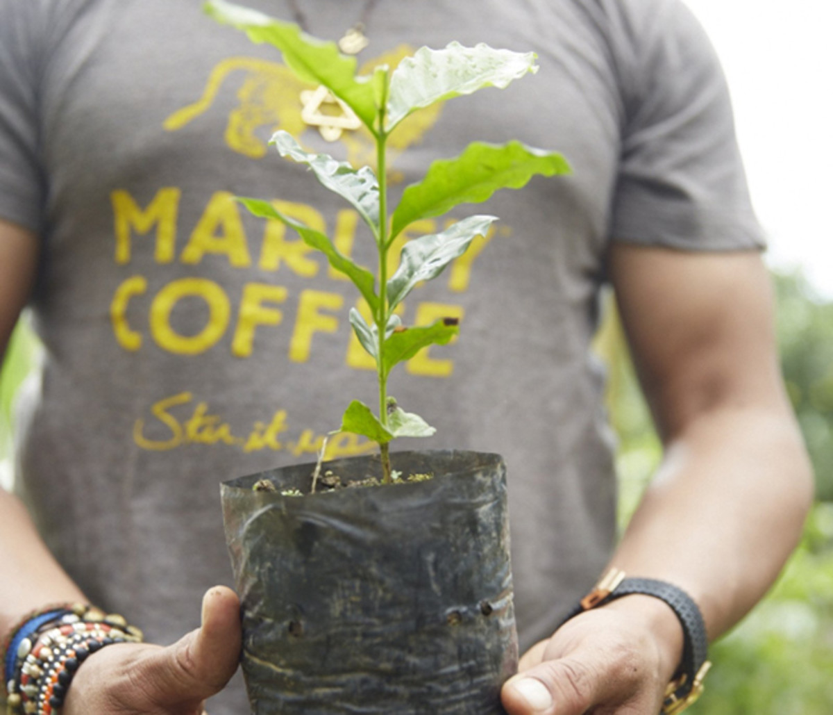 Marley Coffee is a $5.6 million-per-year business that produces artisan-roasted-gourmet coffee.