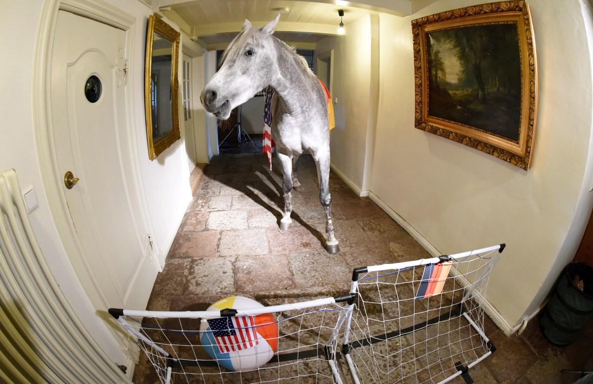 Nasar the horse kicking a ball into a goal