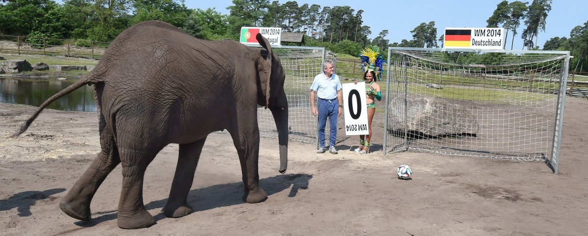 Nelly the Elephant kicking a ball into a goal