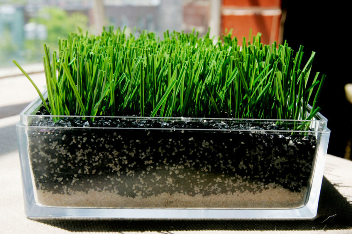 Field Turf and other next-gen surfaces employ rubber pellets, sand and other materials to soften the surface and make its response more grass-like. (Pascale Simard/Bloomberg News)