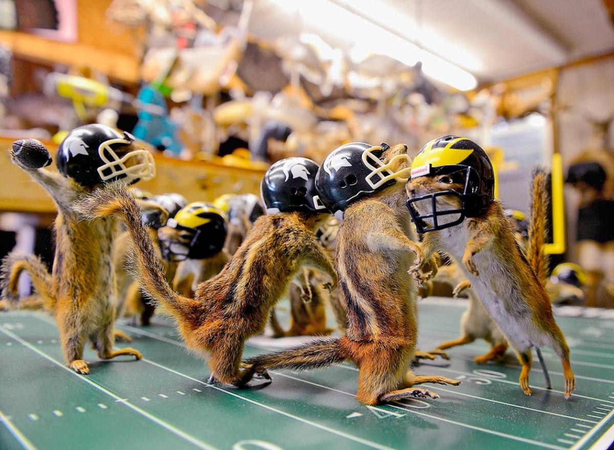 2015-0810-Michigan-Michigan-State-chipmunks.jpg