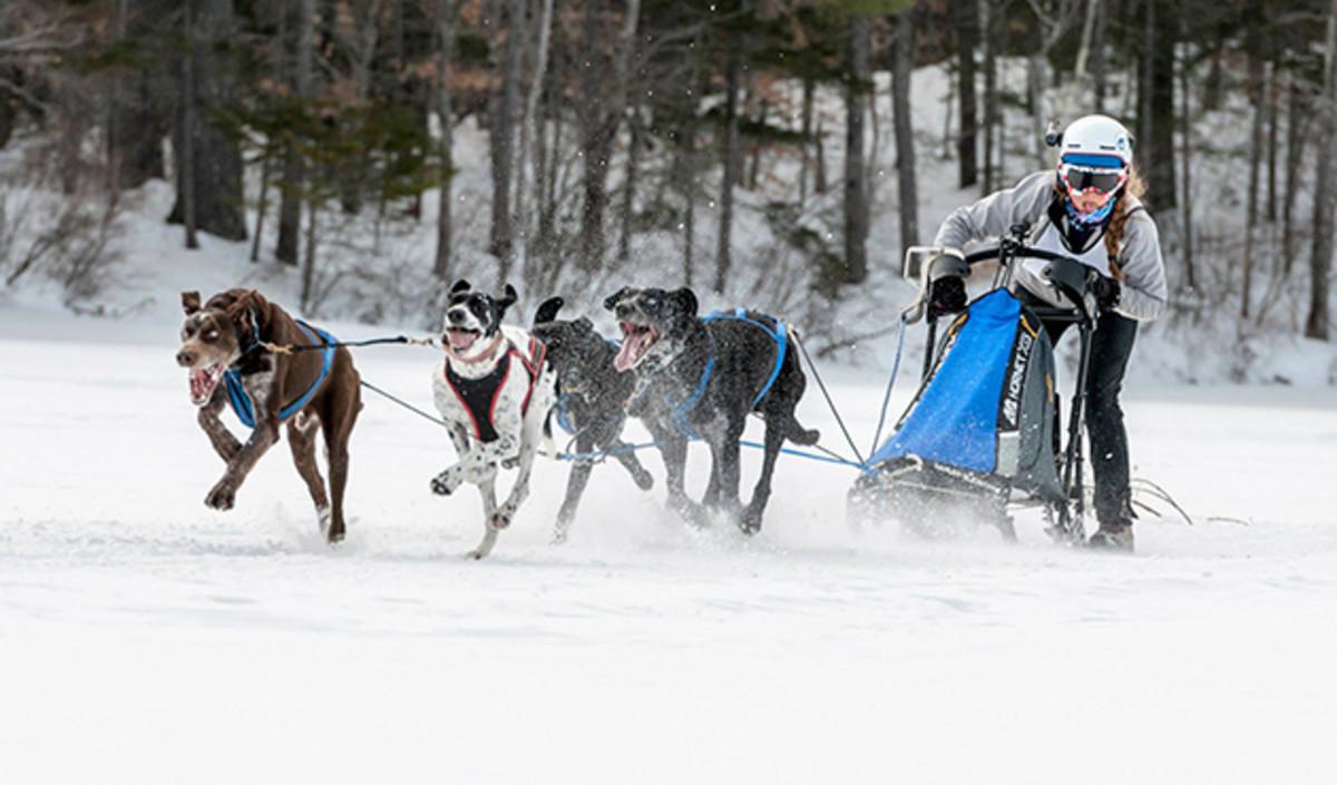 sled-dog-racing-630-2_0.jpg