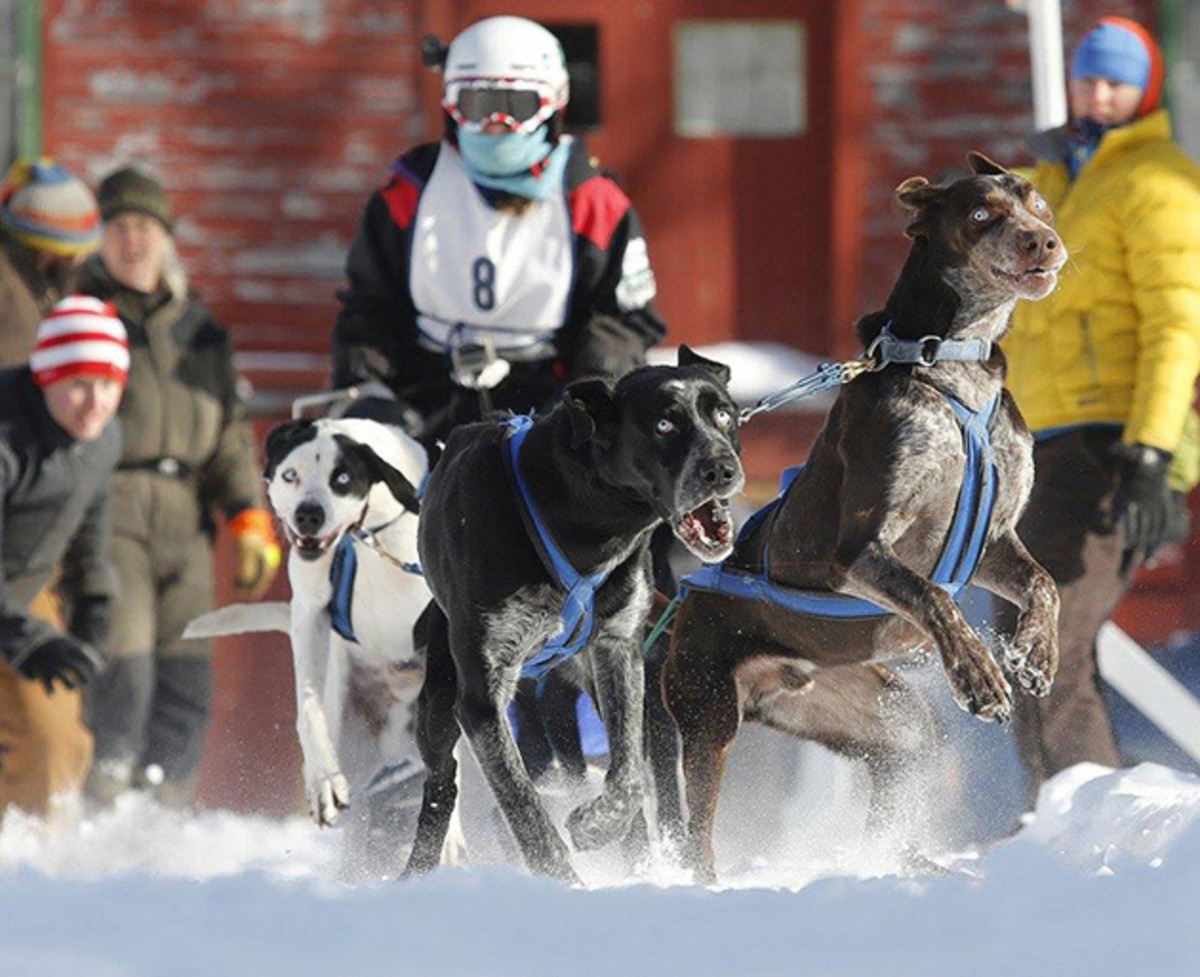 sled-dog-racing-630.jpg