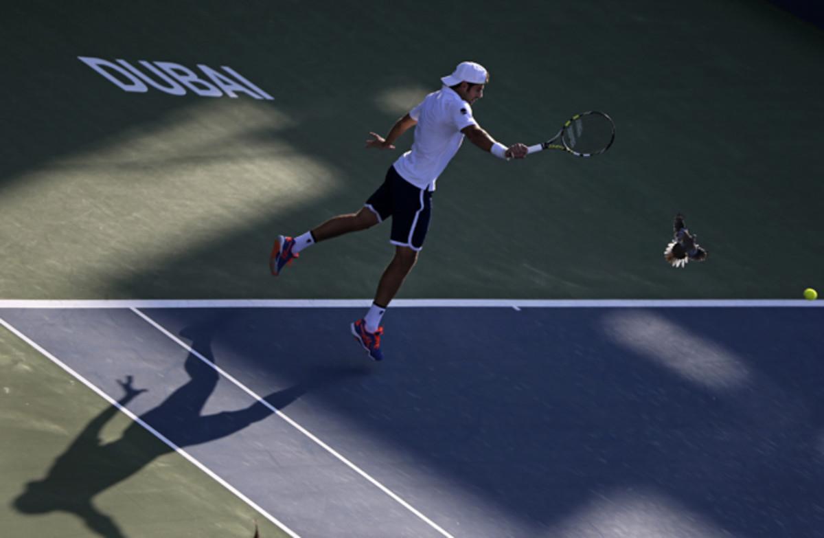Simone Bolelli returns the ball to Tomas Berdych in Dubai as a pigeon flies over the court.