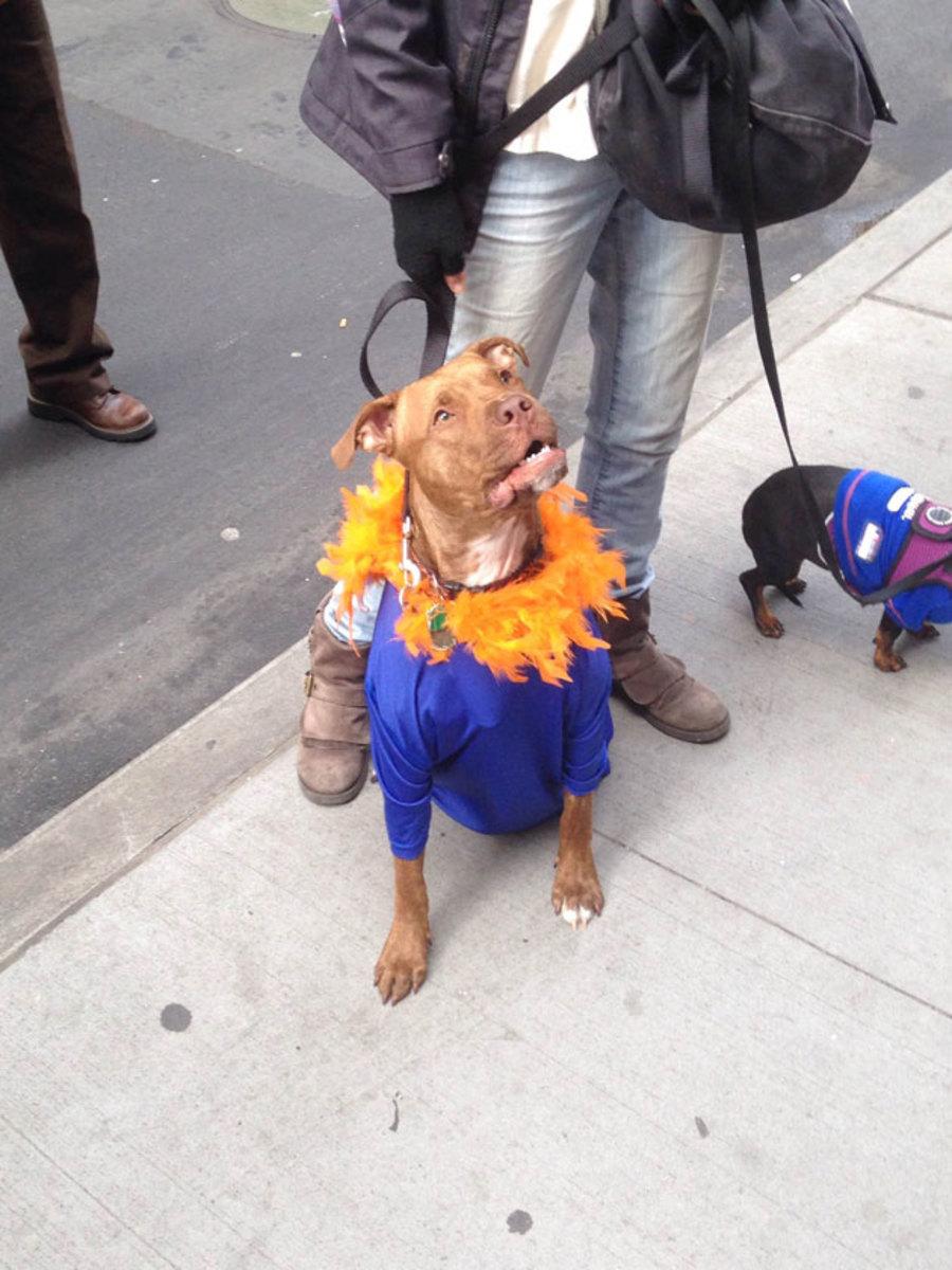 funny-dog-mets-parade.jpg