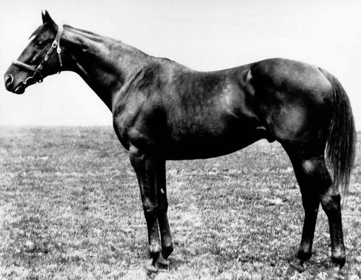 1919-Sir-Barton.jpg