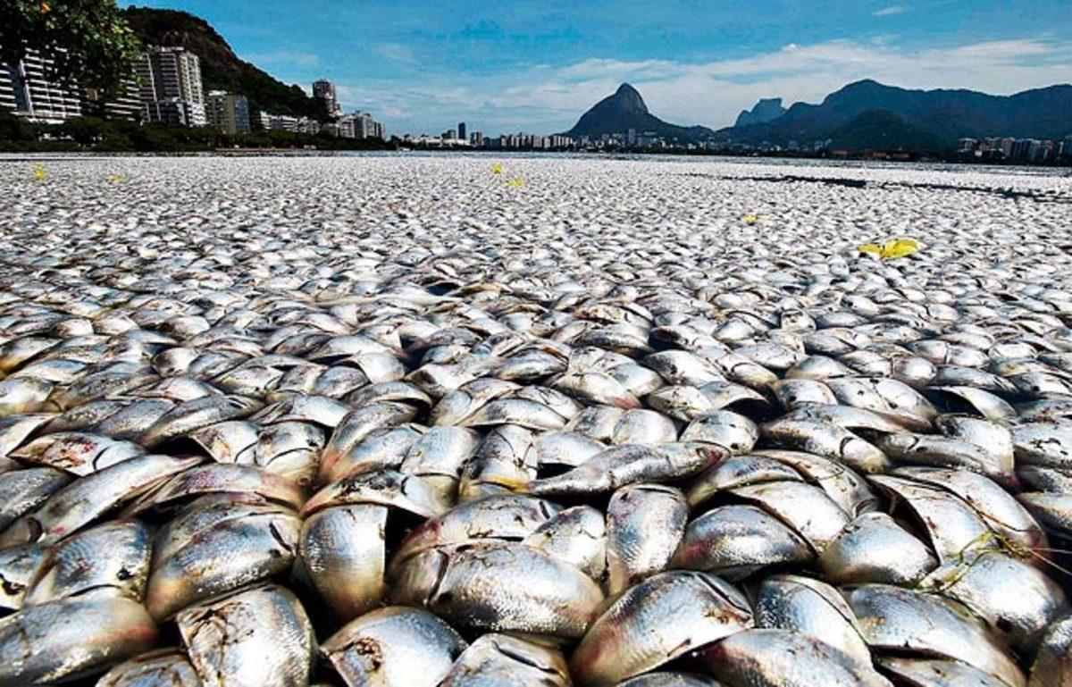 131011163220-032513-dead-fish-rio-de-janeiro-single-image-cut.jpg