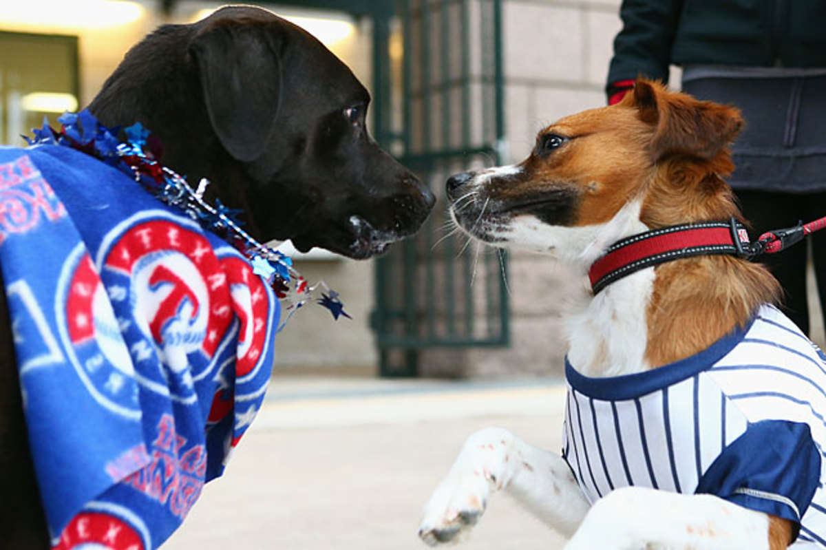130722175142-texas-rangers-dogs-167939325-single-image-cut.jpg