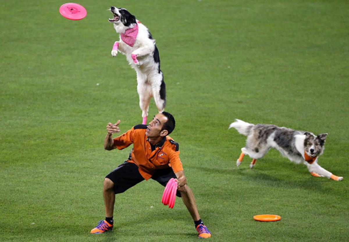 130722175117-new-york-mets-home-run-derby-dogs-single-image-cut.jpg