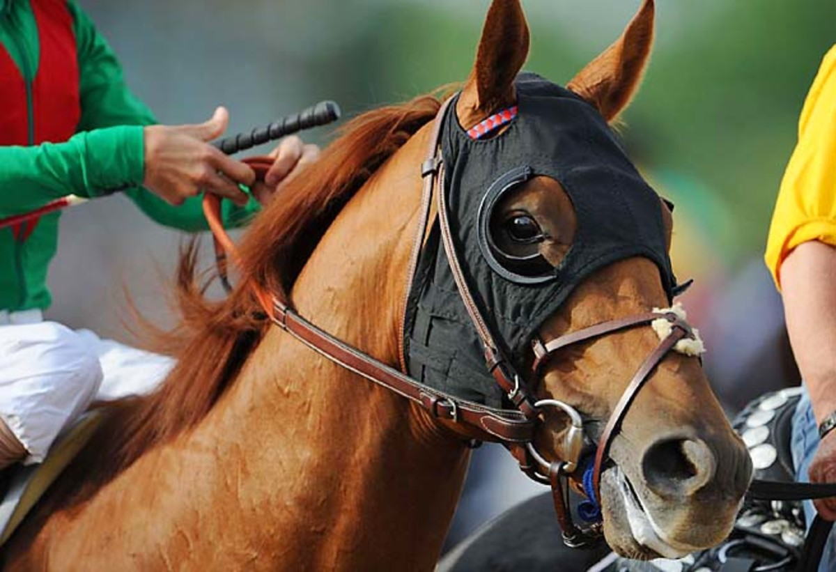 Animal Kingdom won the 2011 Kentucky Derby and Preakness but was sixth at the Belmont.