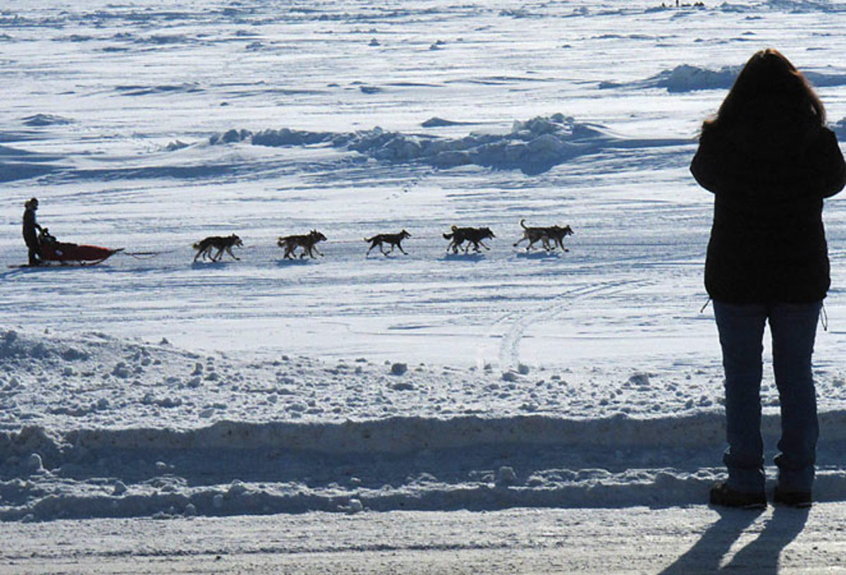 An observer  takes pictures of an Iditarod musher. The Alaskan race suffered its first dog death since 2009 this year.