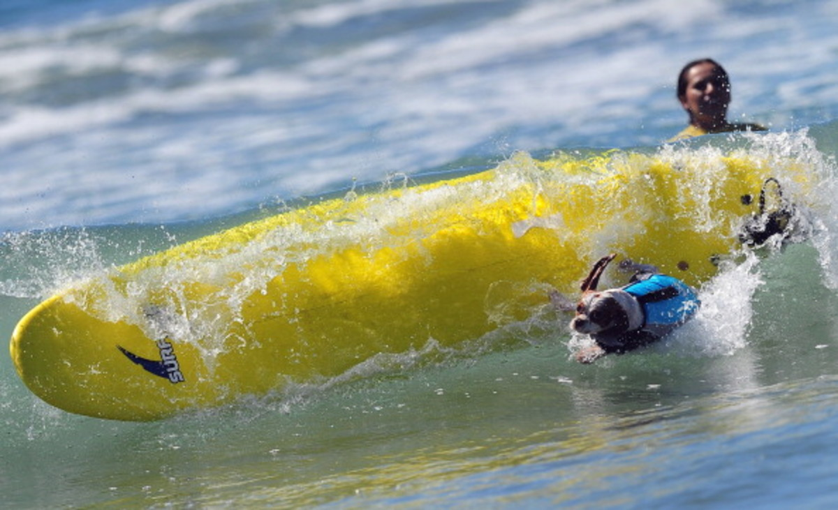 dog-surfing-6.jpg