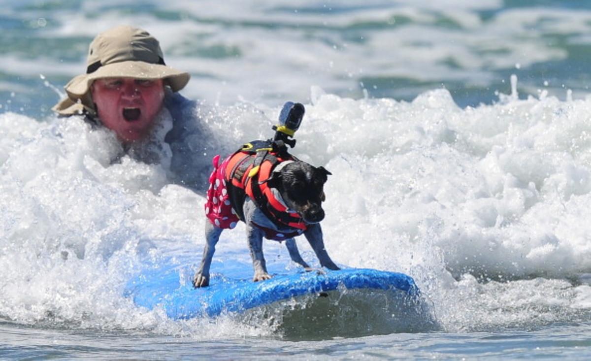 dog-surfing.jpg