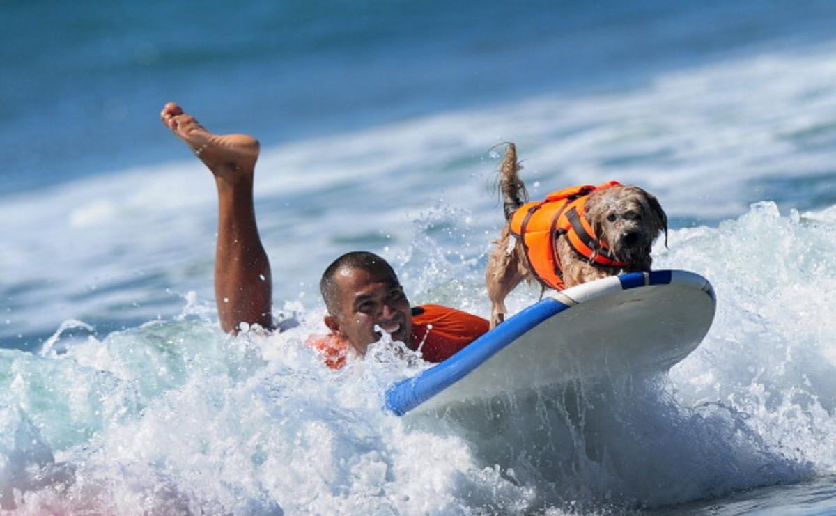 dog-surfing-9.jpg