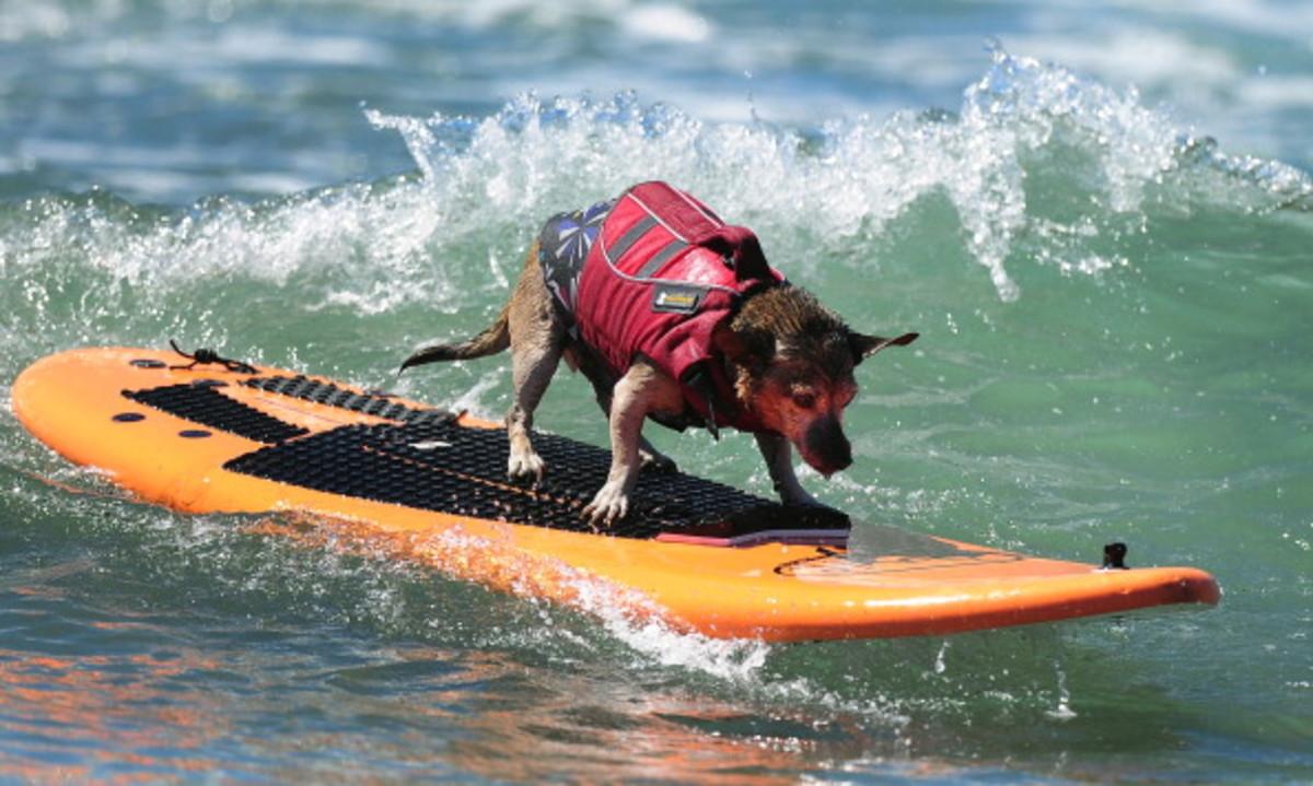 dog-surfing-11.jpg