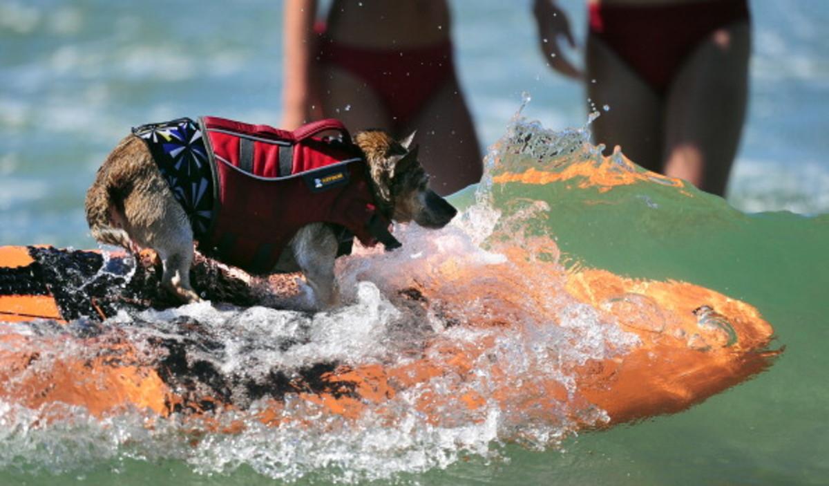 dog-surfing-4.jpg