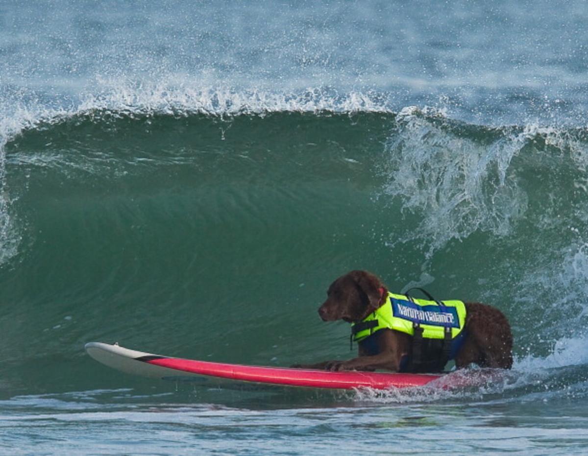 dog-surfing-16.jpg