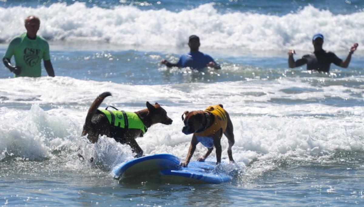 dog-surfing-7.jpg