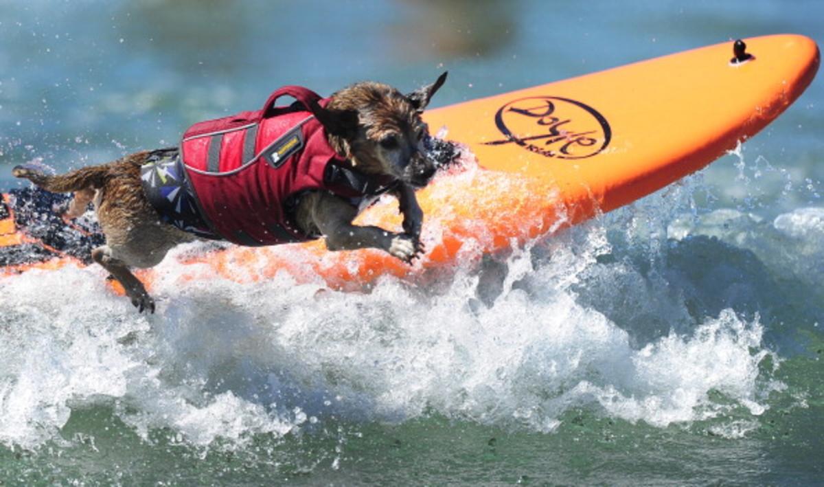 dog-surfing-5.jpg