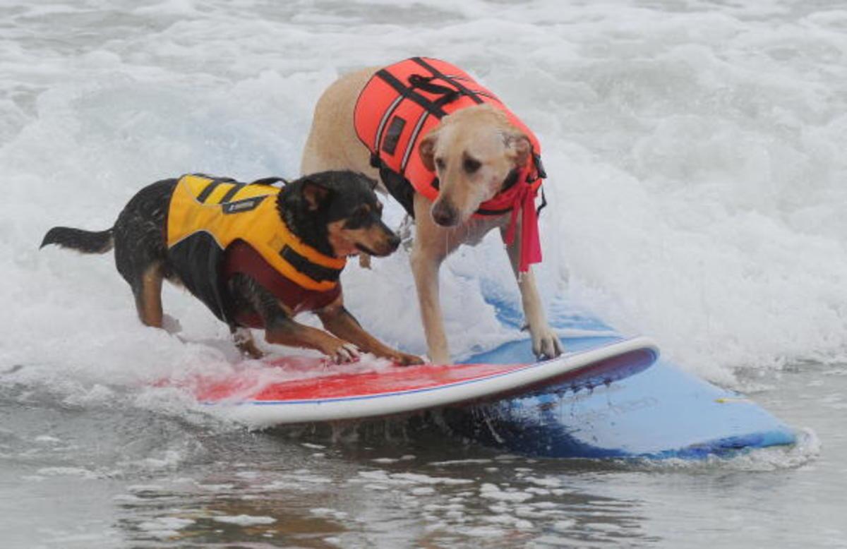 dog-surfing-19.jpg