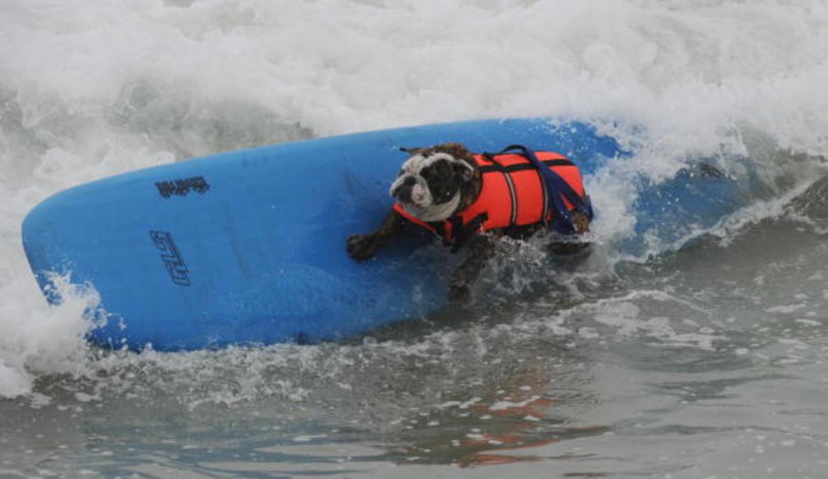 dog-surfing-17.jpg