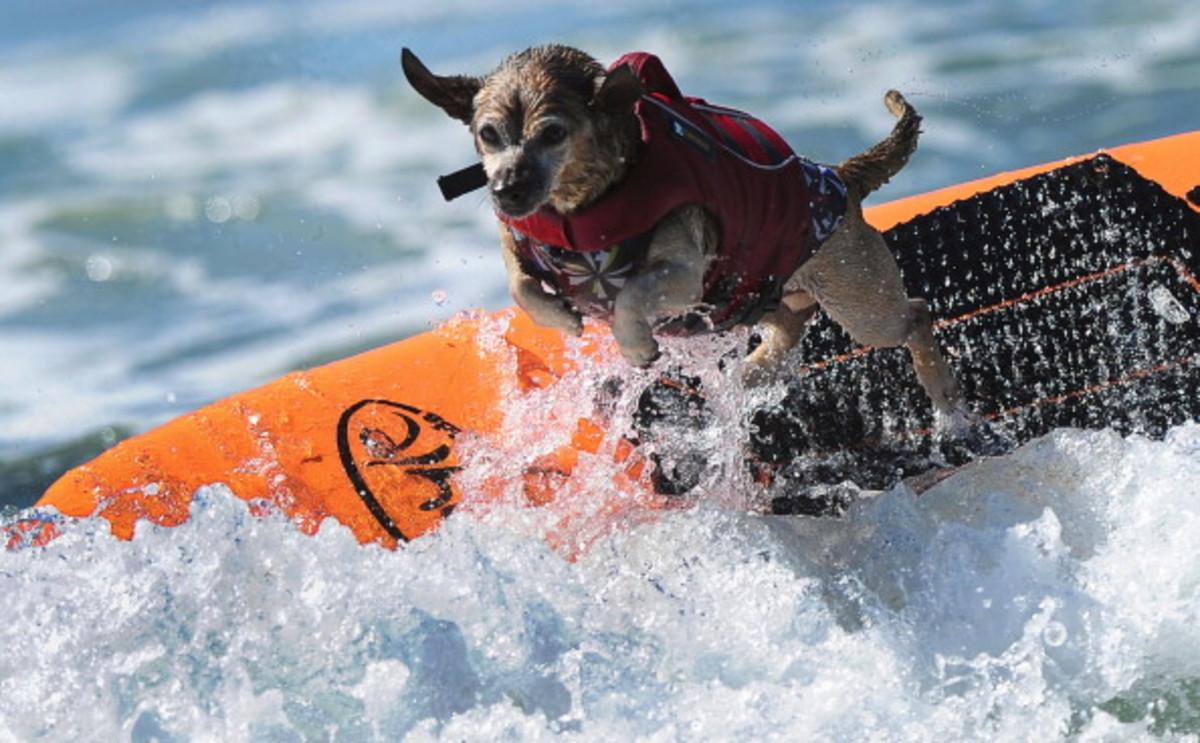 dog-surfing-12.jpg