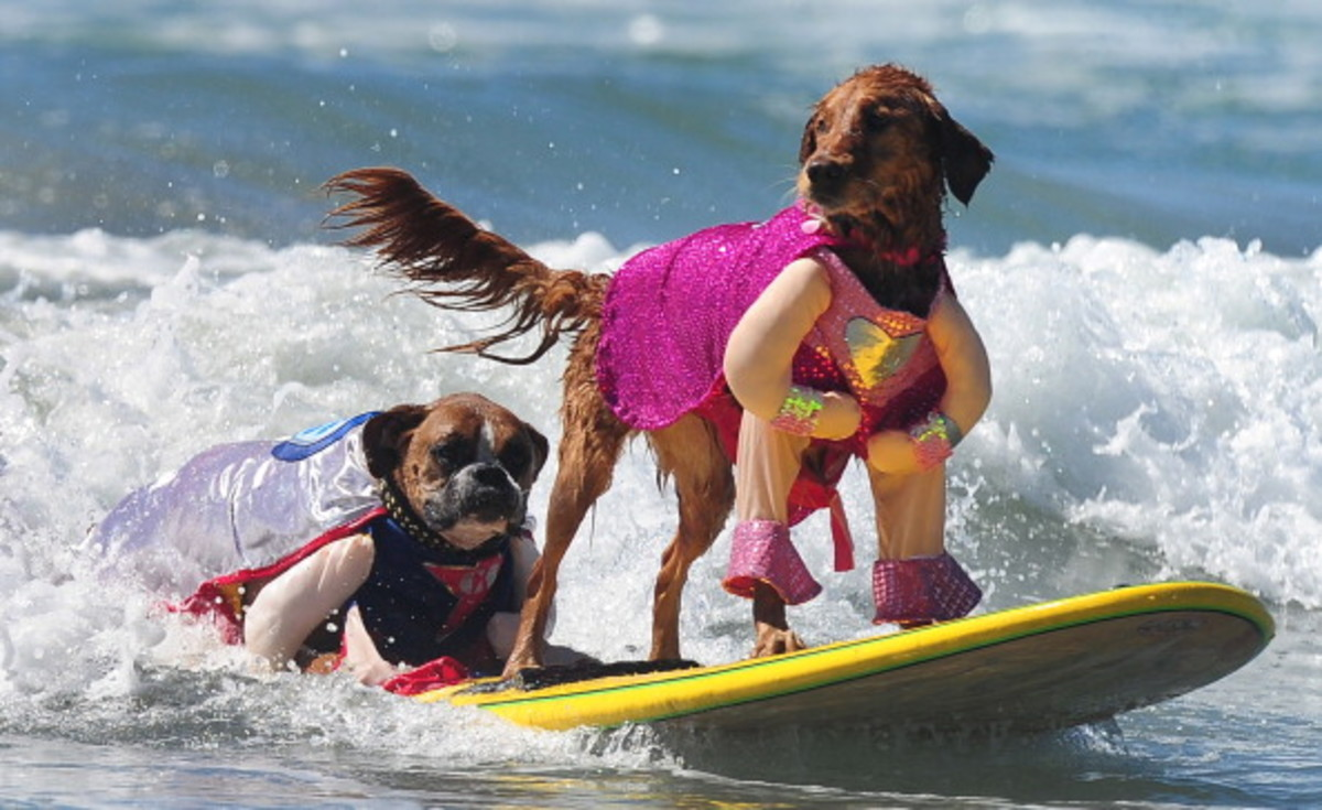 dog-surfing-13.jpg