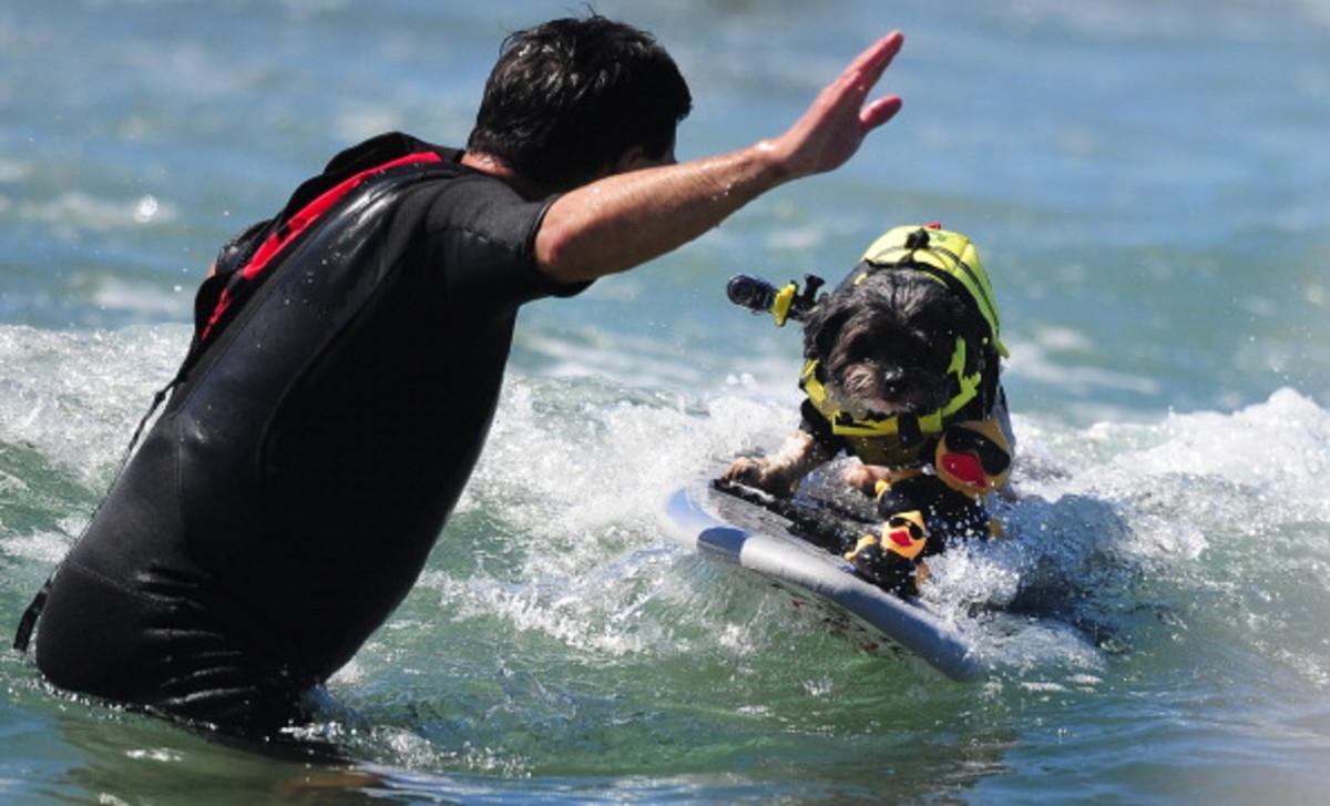 dog-surfing-3.jpg