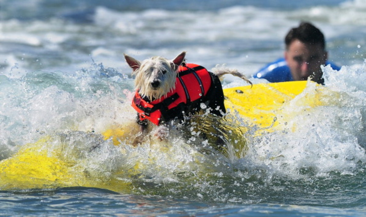 dog-surfing-10.jpg