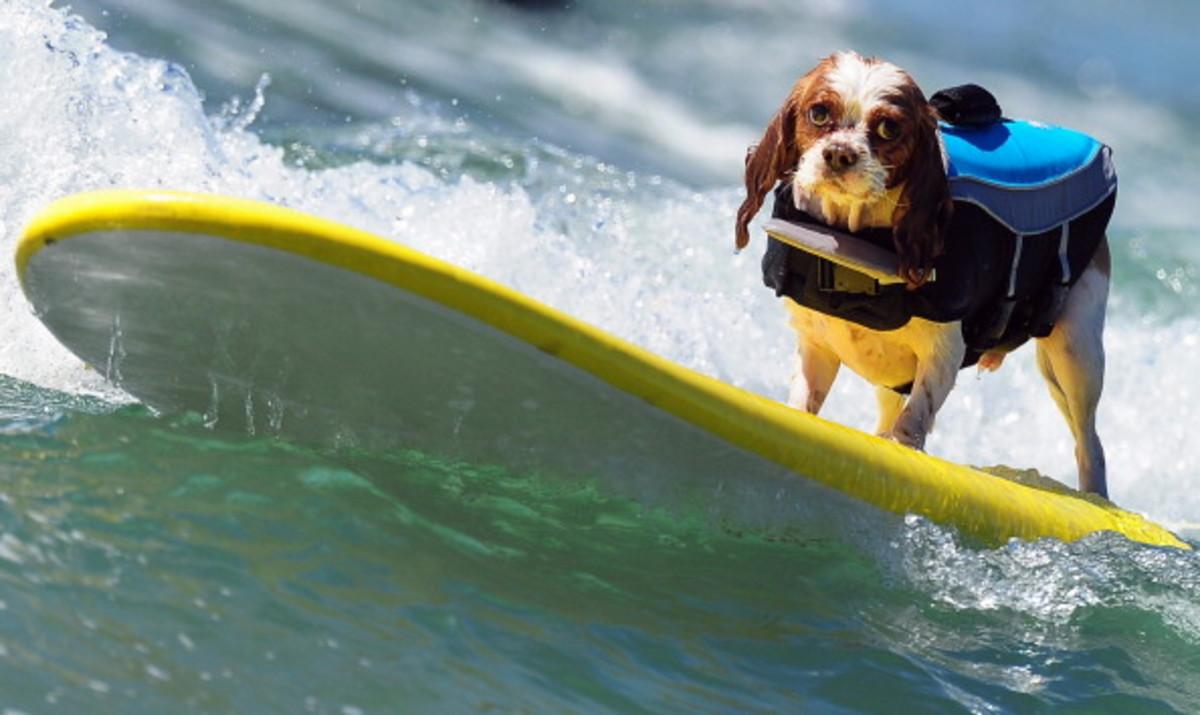 dog-surfing-8.jpg