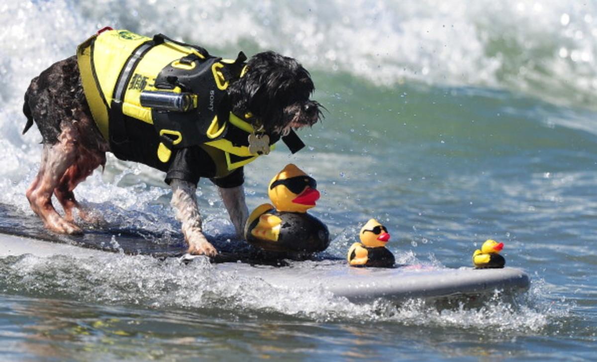 dog-surfing-14.jpg