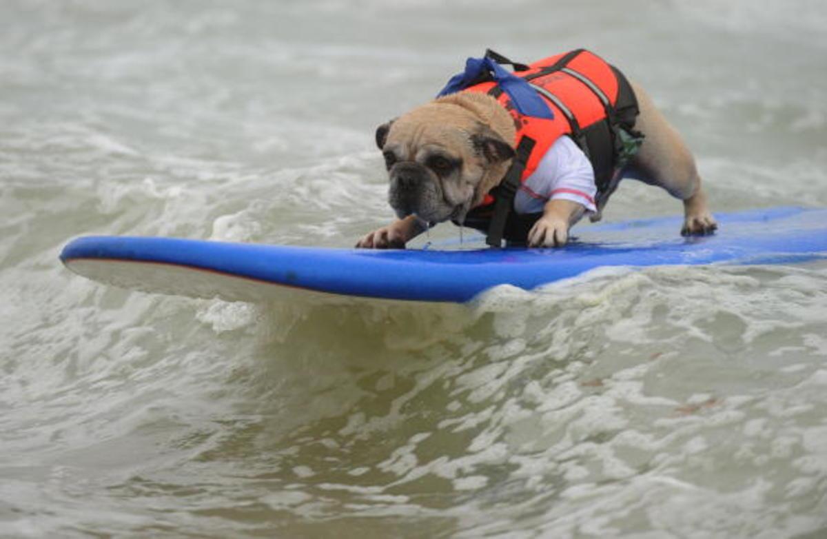 dog-surfing-18.jpg