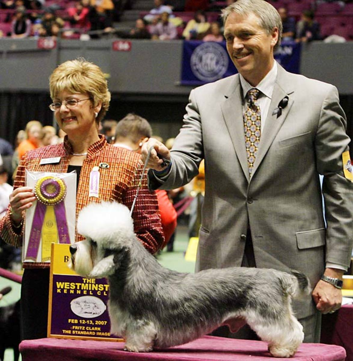 Harry, a Dandie Dinmont Terrier