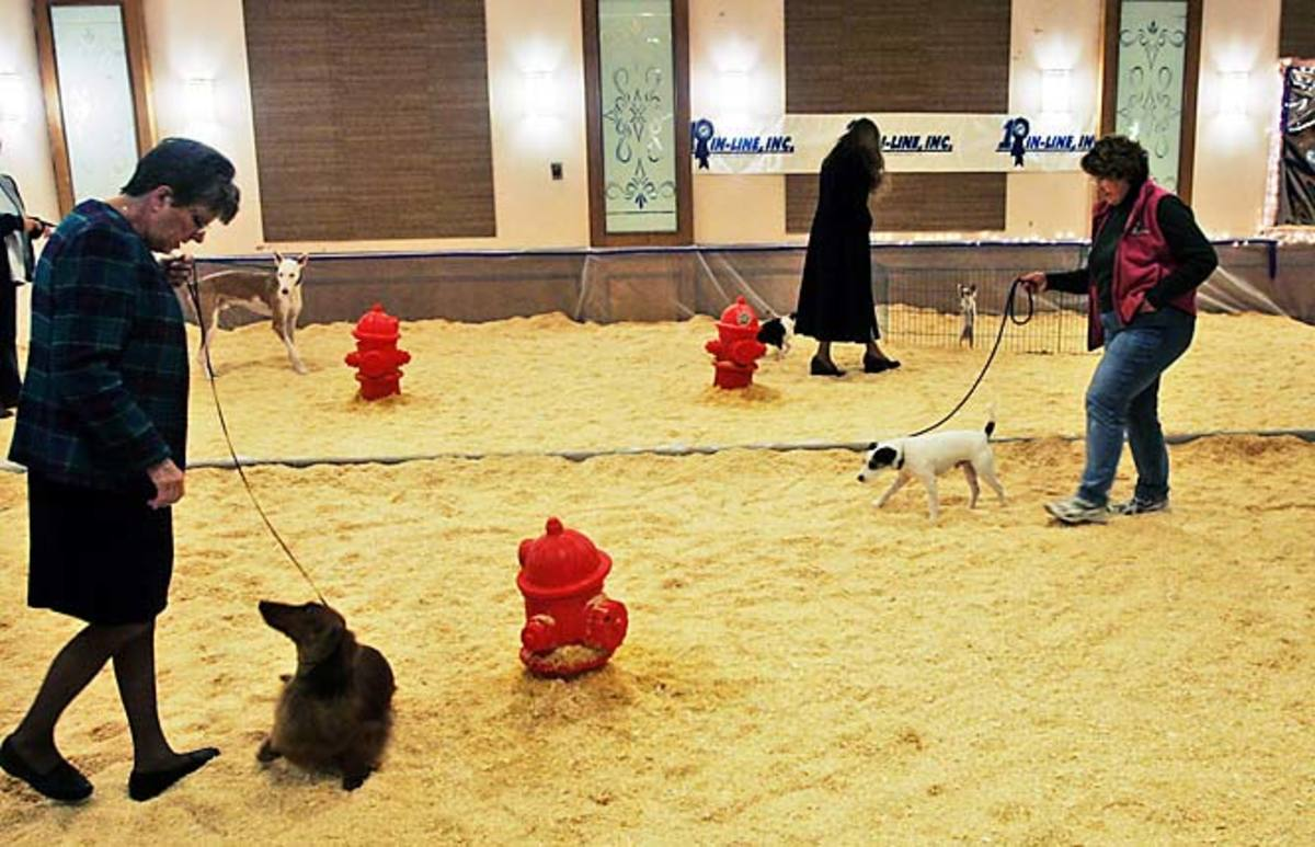 Dog walk at the Westminster Dog Show.