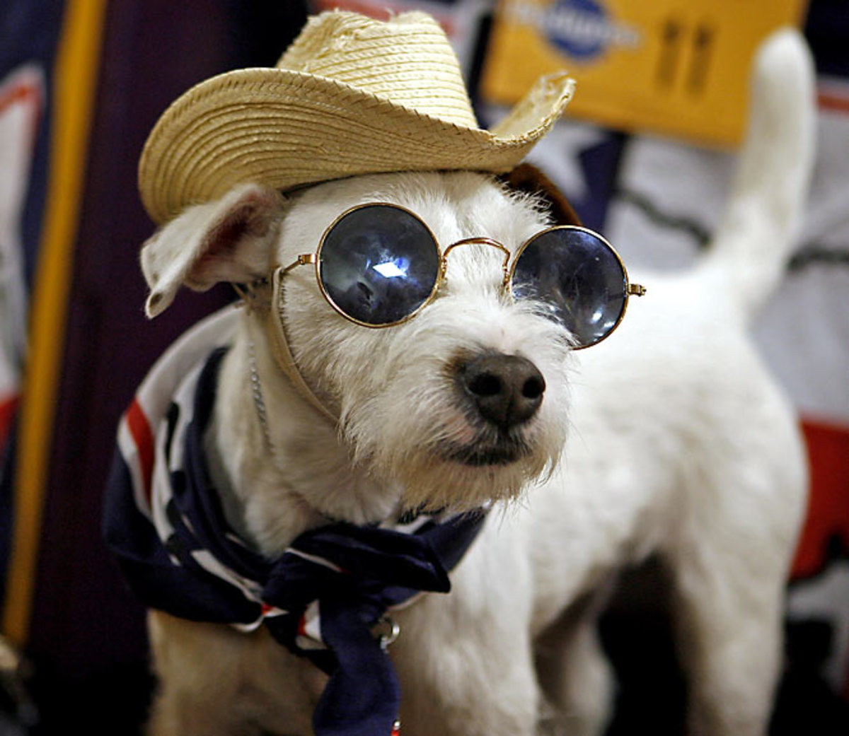 Pogo, a Parson Russell terrier