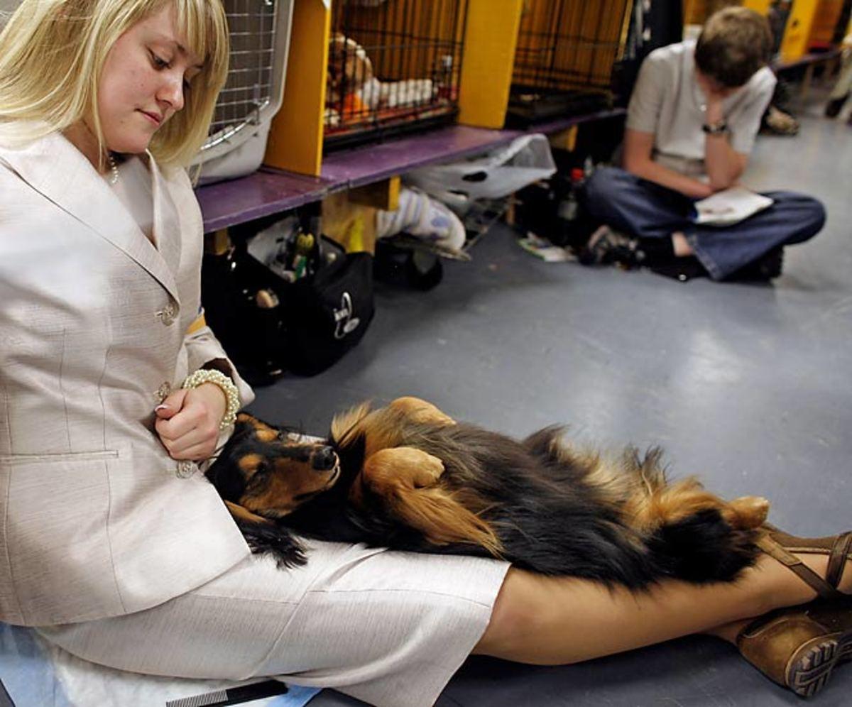 Harlee, a miniature long haired dachshund