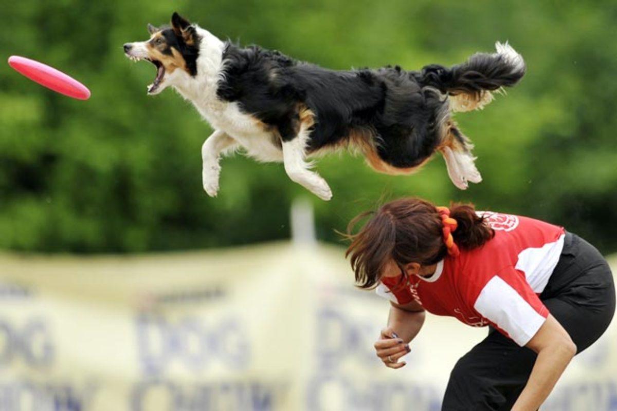 hungary-Flying-Dogs%282%29.jpg
