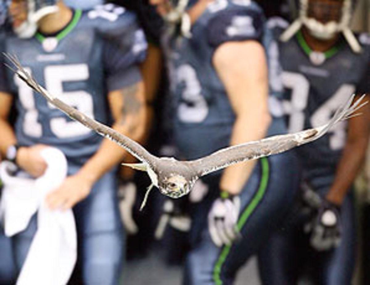 seahawks-hawk.jpg