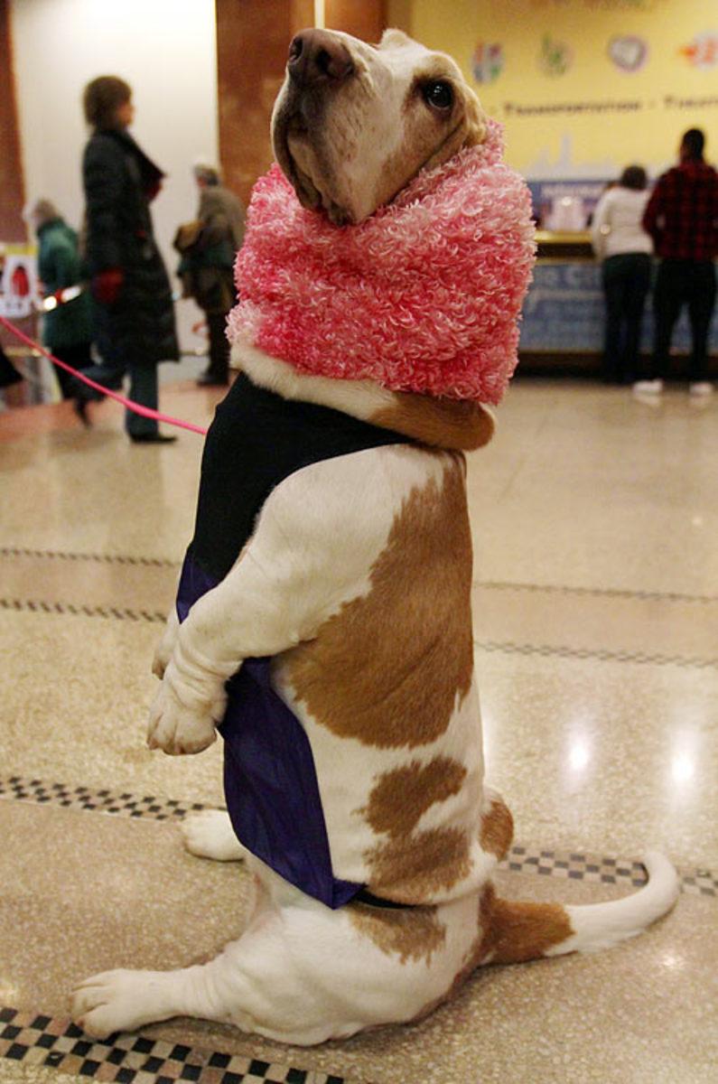nicole.Westminster-Dog-Show.jpg