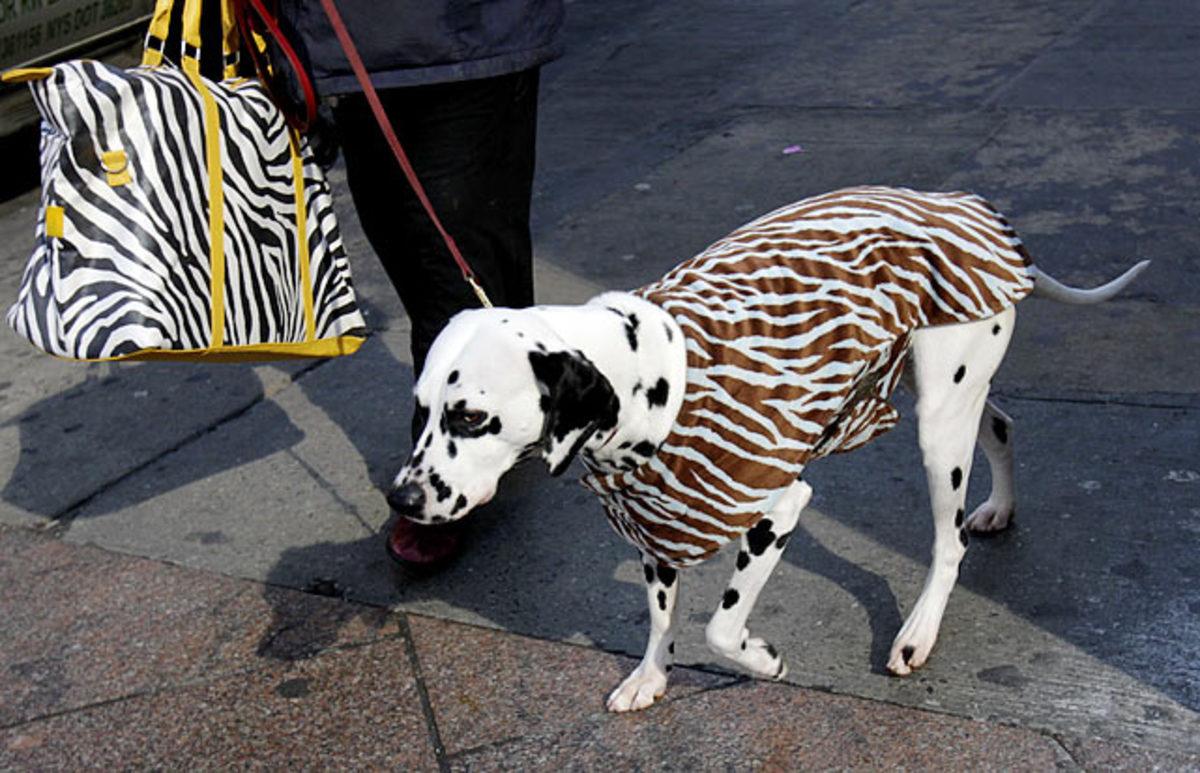 mia.Westminster-Dog-Show-Previe.jpg