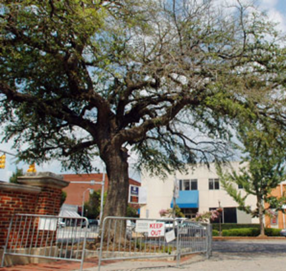 toomers.trees.jpg