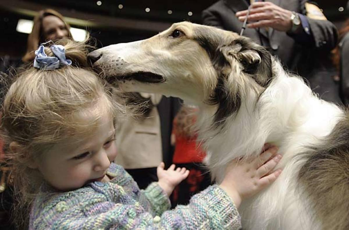 "Ajax, a Russian wolf hound or ""Borzoi"""