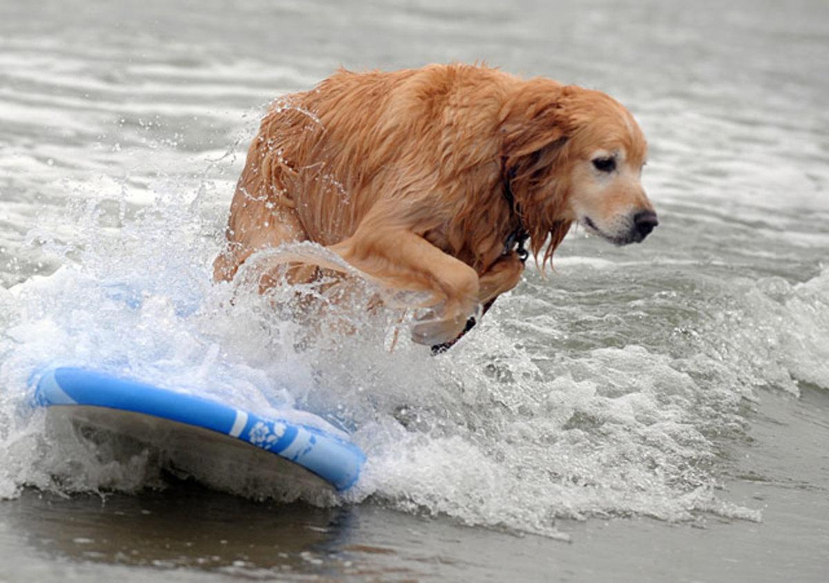 dog-surf2.jpg