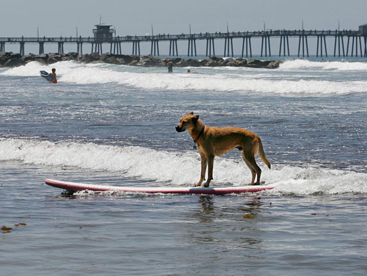 dog-scenic.jpg