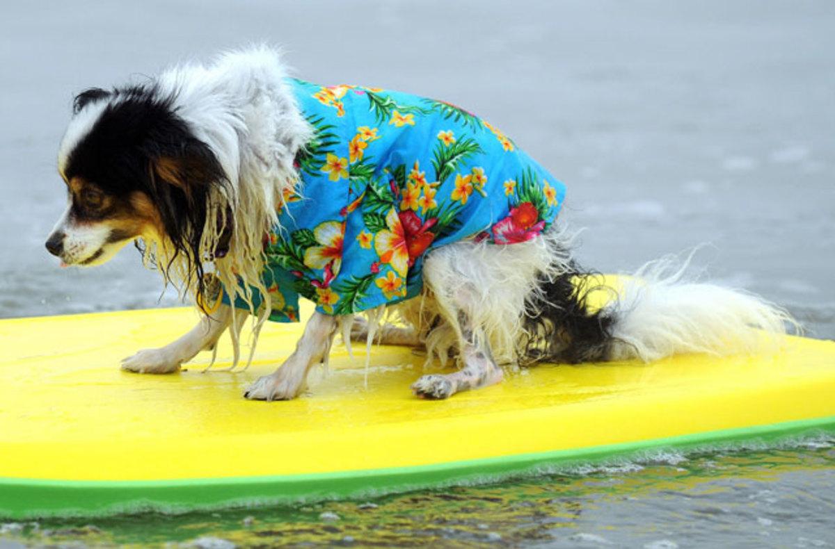 scared-surf-dog.jpg