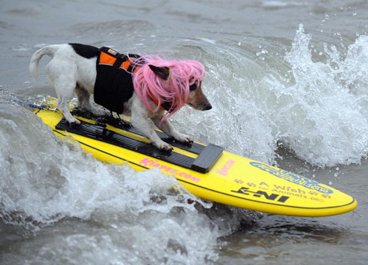 dog-surf4.jpg